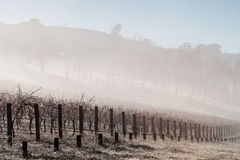 Fog In The Vines in the Yarra Valley Royalty Free Stock Photography