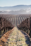Fog In The Vines in the Yarra Valley Royalty Free Stock Photo