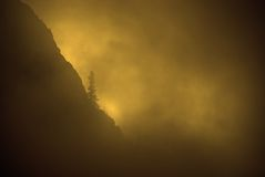 Fog, Warm Sunlight and Pine Tree on Rugged Mountainside royalty free stock images