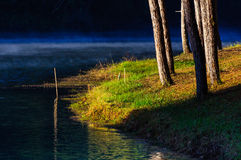 Fog water at pang-ung, pine forest in thailand Stock Photo
