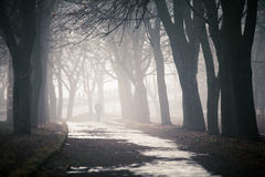 Fog on a way. Winter the snow forest in the early morning Stock Photos