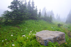 Fog and wildflowers cover a mountain in Glacier National Park. Stock Image