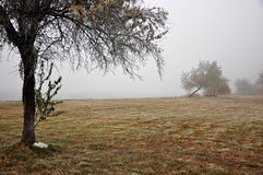 Fog in a winter day Royalty Free Stock Image