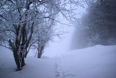 Fog in winter forest Stock Images