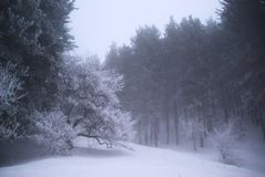 Fog in winter forest Royalty Free Stock Photos