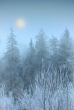 Fog in winter forest. In frosty morning Royalty Free Stock Photo