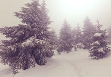 Fog in winter forest Stock Photos