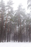 Fog in winter forest Royalty Free Stock Image