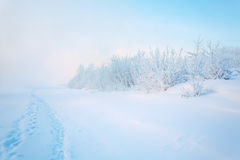 Fog in winter. Morning fog on the river in winter Royalty Free Stock Image