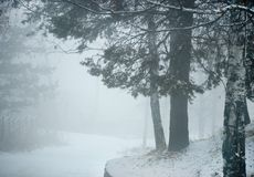 Blind road in winter pine trees forest. Fog in winter scene with pine trees and covered by snow road in mountains of Kazakhstan Royalty Free Stock Photography