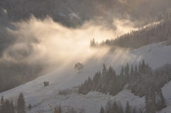 Fog in wintertime Royalty Free Stock Image