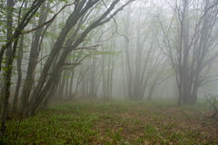 Fog in wood Royalty Free Stock Photography