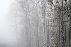 Fog in a wood Royalty Free Stock Image