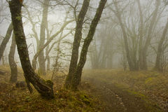Fog in wood Royalty Free Stock Image