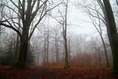 Fog in wood. In central Europe Royalty Free Stock Photos
