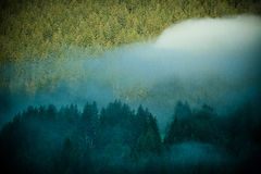 Fog in a wood of Dolomites mountains, Italy Stock Photo