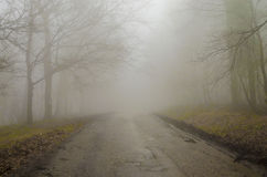 Fog in the wood/ Wood in the Mist/magla u sumi. Wood in the Mist with one road in the middle, early morning Royalty Free Stock Images