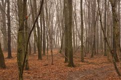 fog in woodlands Stock Photography