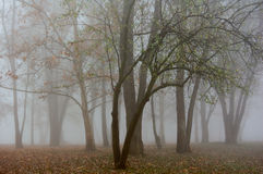 Fog woods. Autumn and Summer wood colour in fog Royalty Free Stock Photos