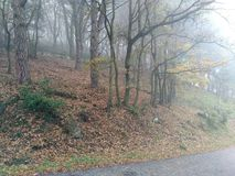 The fog in the woods royalty free stock photo