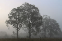 Fog in woods Royalty Free Stock Image