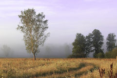 Fog in woods Stock Photo