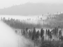 Fog in Yosemite Valley. Beautiful scene of a forest covered by low clouds in Yosemite National Park, California Royalty Free Stock Photo
