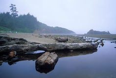 Fogarty Creek, Oregon Stock Photography