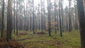 Fogg, осень, лес, деревья, зеленые Стоковое Изображение