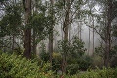Fogged wewnątrz przy góra Wyniosłym ogródem botanicznym, Południowy Australia obraz royalty free