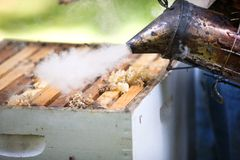 Fogger and honeybee hive Stock Photography