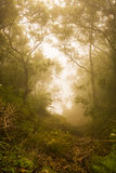 Foggi forest Stock Images