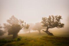 Foggi forest Royalty Free Stock Photography