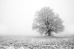 Fogginess day. Shot of a winter tree covered frost mist royalty free stock photos