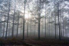 Fogging pine forest and the sun at Dalat- Vietnam. Sunrises somwhere near Dalat city - in Dalat- VietNam- LamDong- VietNam stock photos
