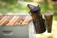 Fogging smoker beekeepers tool to keep bees away from hive Stock Images
