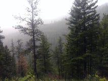 foggy stock fotografie