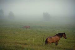 Foggy Stock Image
