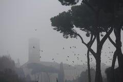 foggy royalty-vrije stock foto's