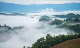 foggy stock foto's