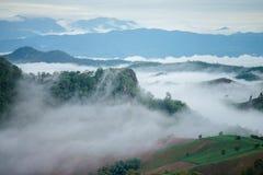 foggy royalty-vrije stock fotografie