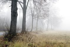 Foggy alley Royalty Free Stock Photo