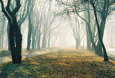Foggy alley Royalty Free Stock Photography