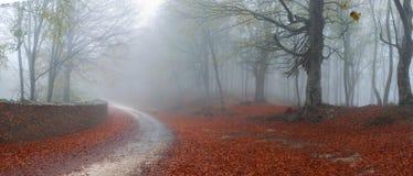 Foggy Asphalt Road Stock Image