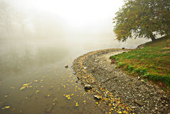 Foggy autumn. Foggy waterside with a tree in autumn Royalty Free Stock Photography