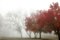 Foggy Autumn Royalty Free Stock Images