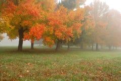 Foggy Autumn Stock Photos