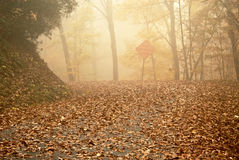 Foggy Autumn Day Royalty Free Stock Images
