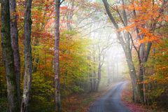 Foggy autumn drive Stock Photography