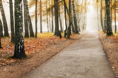 Foggy autumn fores Royalty Free Stock Images